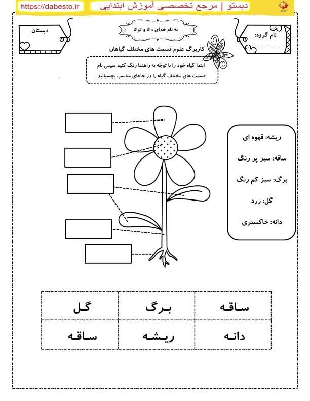 کاربرگ علوم اول ابتدایی  قسمت های مختلف گیاهان