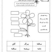 کاربرگ علوم قسمت های مختلف گیاهان