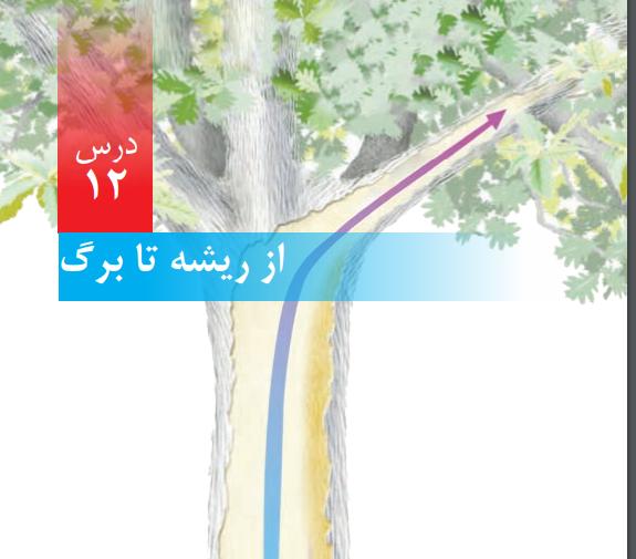 درس دوازدهم علوم پنجم ابتداییاز ریشه تا برگ